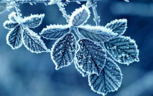 Schnee Blatt